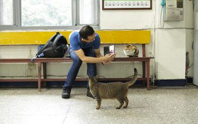 台北から遠足。猫がいっぱいの猴硐猫村へ